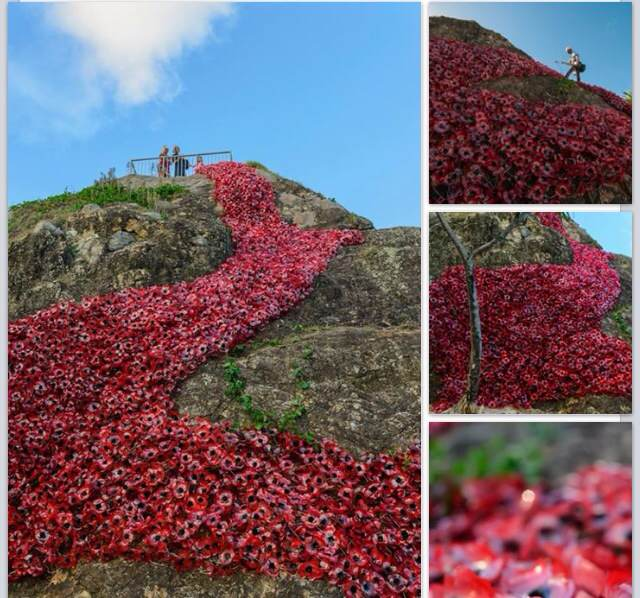 5000 poppies from 10000 recycled bottles on Elephant Rock, Currumbin Gold Coast to celebrate 100 year anniversary